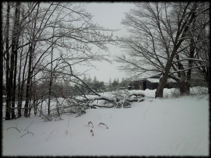 Hardwood Trails 942
